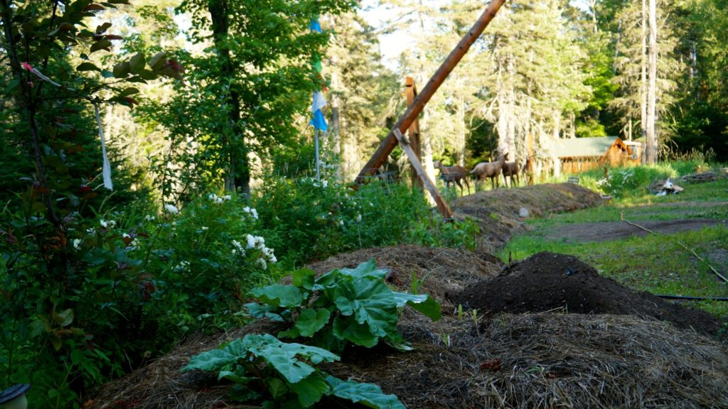Permaculture-year-1-16