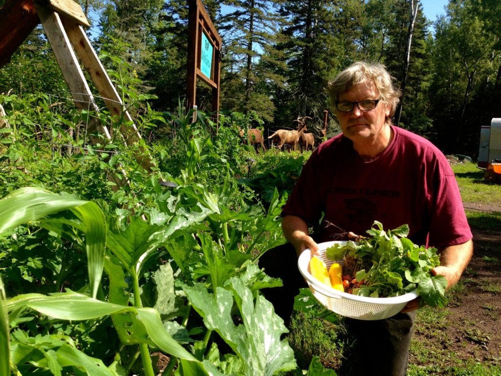 Permaculture-year-1-harvest-10