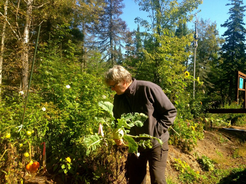 Permaculture-year-1-harvest-14