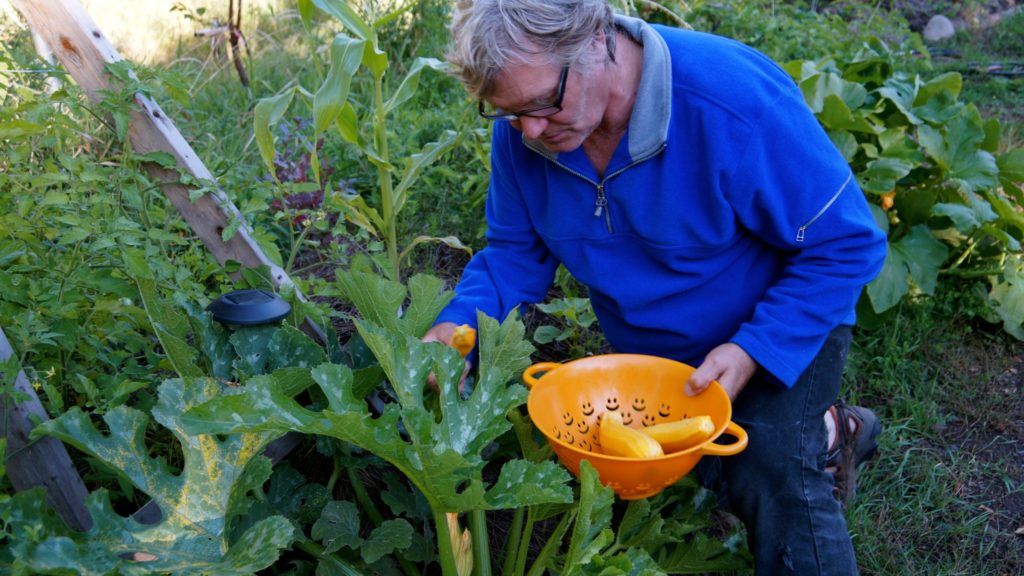 Permaculture-year-1-harvest-2