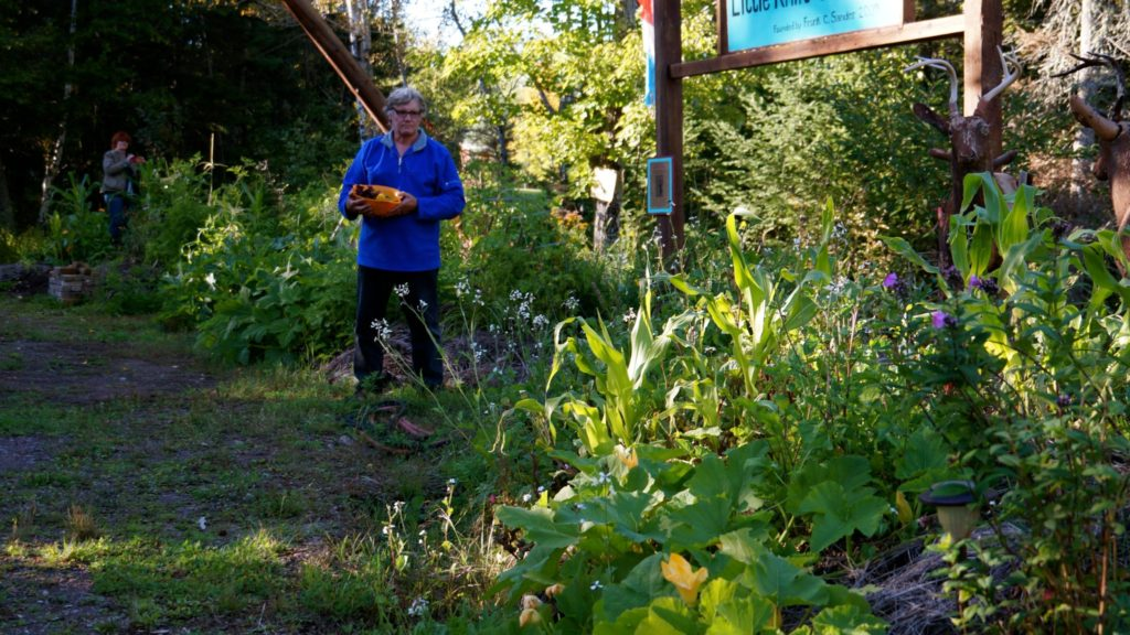 Permaculture-year-1-harvest-4