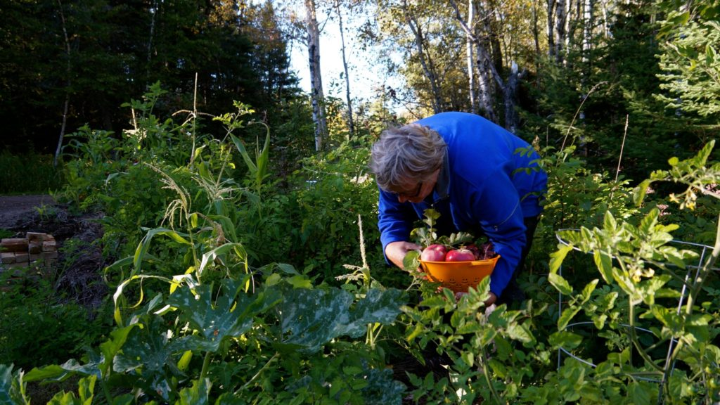 Permaculture-year-1-harvest-6