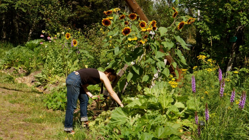Permaculture-year-2364